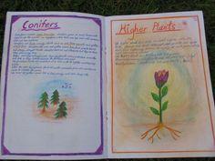 Class 5 Plant Study Class 5 Cape Town