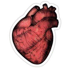 Anatomical Heart - Red Sticker by Squidy (Stickermaker idea!)