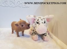Mini & Micro Juliana Baby Pigs For Sale - Mini Pocket Pigs : Mini Pocket Pigs Baby Pigs For Sale, Micro Piglets, Pocket Pig, Baby French Bulldog, Indoor Pets, Pet Pigs, Teddy Bear, Mini, Dogs