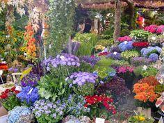 Mercado de flores Amsterdam, Bloemenmarkt en el canal Singel.