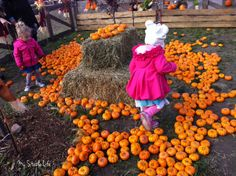 Places to visit in Alberta with kids. Calgary Corn Maze, Calgary, AB. My Stable Life (blog) by Jenn Webster.