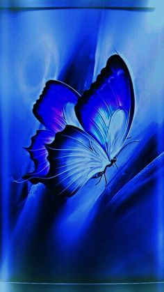 Blue Butterfly Wallpaper, Butterfly Art, Blue Wallpapers, Wallpaper Backgrounds, Everything Is Blue, Bleu Royal, Butterfly Pictures, Love Blue, Blue Aesthetic