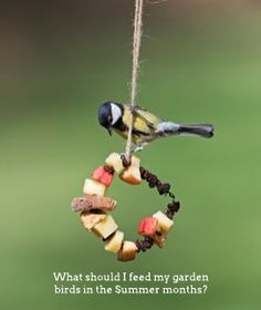 What should I feed birds in summer? During the summer months, birds require high protein foods, especially while they are moulting. Black sunflower seeds, pinhead oatmeal, soaked sultanas, raisins and currants, mild grated cheese, mealworms, waxworms, mixes for insectivorous birds, good seed mixtures without loose peanuts, RSPB food bars and summer seed mixture are all good foods to provide. Soft apples and pears cut in half, bananas and grapes are also good.