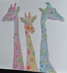 Reino Animal de Millie Marotta #milliemarotta #animalkingdom #adultcoloring