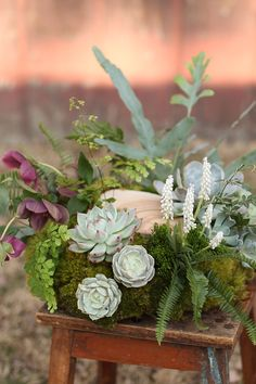 Woodland centerpiece by Cincinnati wedding florist Floral Verde LLC.  Centerpiece contains Juniper slices, burgundy helleborus, white muscari, Echeveria colorata, Echeveria lucita, Echeveria derenbergii, Echeveria Lola, Kalanchoe tomentosa, Blue Star fern, Haworthia fasciata, Silver Lace fern, green trachelium, Kimberly Queen fern, mood moss and Maidenhair fern.
