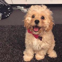 この驚くべき小さなフロプティシティ・フロップダイド:   17 Happy Floofernuggets Who Just Want To Give You Cuddles