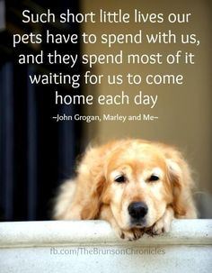 Such short little lives our pets have to spend with us, and they spend most of it waiting for us to come home each day