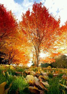 New Hampshire Autumn Autumn Autumn Autumn Autumn Autumn Autumn Autumn Autumn Autumn
