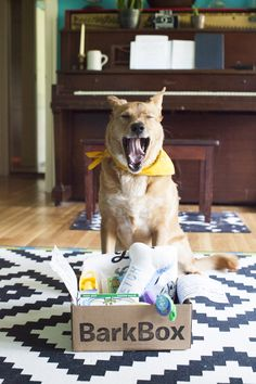 BARKBOX (bahrk-boks), noun: For dog lovers, BarkBox is a monthly box of paw-picked toys and all-natural treats. For pups, it's the joy of a thousand belly scratches. For mailmen, it's burying the bone and hatchet. Get the dog in your life started with a BarkBox today!