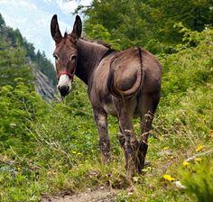 Feeding Minis, Ponies, Draft Horses, Mules, and Donkeys | TheHorse.com