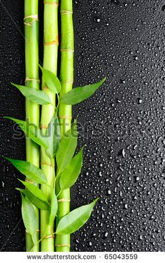 Bamboo Stock Photos, Images, & Pictures | Shutterstock