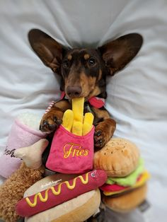 Dachshund Small Dog Bed Snuggle Bed For Burrowing Dog