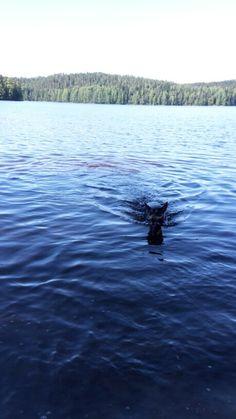 Kallavesi Kuopio