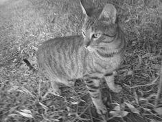 Gatitos lindos en color mocromatico
