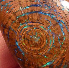 Opalized wood fossil