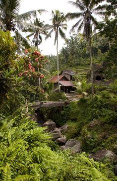"""Bali, Ubud. A bridge takes you over the gorge and into the Gunung Kawi Temple, set amongst the beautiful rice paddies around Ubud."""