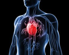 This natural cure has been proven successful for heart disease. Use it when you feel any heart problems, such as stabbing, flickering, crossing, due to stress. It is also good against angina pector. Cholesterol Symptoms, Cholesterol Lowering Foods, Cholesterol Levels, Eggs Cholesterol, Heart Failure Treatment, Diabetes, Heart Attack Symptoms, Heart Conditions, Human Body