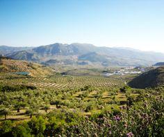 Vista del paisaje y pueblo de Pegalajar y su continuación hacia La Guardia y Sierra Mágina, desde la finca El Puerto de olivar ecológico situada en la sierra de Pegalajar, dentro del Parque Natural, y a mas de 1000 metros de altura.
