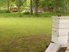 Avoiding Urban Beekeeping Problems