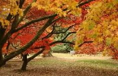 Westonbirt Arboretum is about 20 minutes away and is beautiful all year round not only in the Autumn