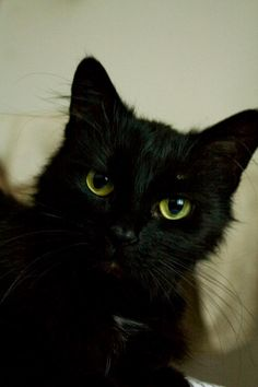 [Mourning/Loss] My first Cat Lady Sappho 16 years old went to sleep today.