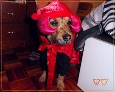 Este é o Zuka, um grande amigo e fiel companheiro...  Registe-se também no nosso site e partilhe connosco as fotos do seu animal de companhia!  www.veterinario24horas.pt