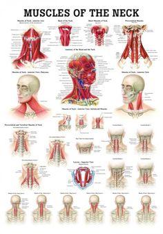 57 Melhores Imagens De Voz Fonoaudiologia Anatomia Cabeça
