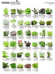 Paleta Vegetal   Vertical Gardens