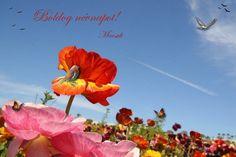 Serföző Edit 09 16 Name Day, Names, Plants, Saint Name Day, Plant, Planets