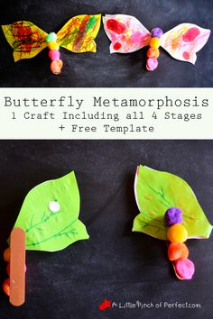 Butterfly Metamorphosis Craft and Free Template-egg, caterpillar, chrysalis, and butterfly