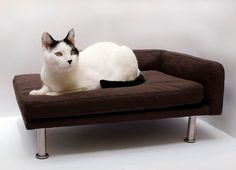 $120.00 for a Chaise Lounge chair ... for a cat. I'd buy it.. #cat #furniture