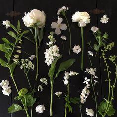 Expert Advice: 10 White Garden Ideas from Petersham Nurseries