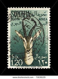 stock photo : SOMALIA - CIRCA 1955: old postage stamp shows Soemmering Gazelle on green background, Somalia, circa 1955. This Gazelle (formerly Gazella soemmerringii) is a gazelle that lives in eastern Africa.