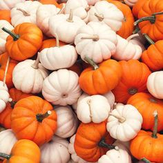 We love baby pumpkins and we cannot lie What's your favorite #pumpkin activity?