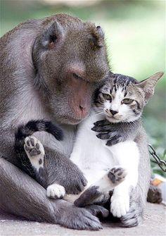 Image: Monkey and cat (© Sukree Sukplang/Reuters)