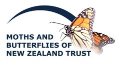 Join MBNZT and be part of a website brimming with information that we learn – and that our members contribute – about the Monarch and NZ's butterflies and moths.