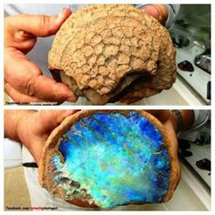⚒ Opal Fossil Coral, Australia  bet we could convince someone this is an alien's brain