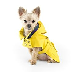 this adorable raincoat almost makes me sad it never rains in Colorado! ll #doglovers #dogs #pets #petlovers #dogoutfits #dogclothes