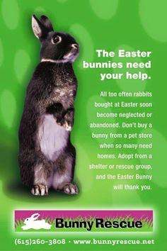 If you're thinking about getting a bunny, please adopt one from one of the many bunny rescues that will be overwhelmed by dumped Easter Bunnies. Locally we have The Bunny Rescue-Nashville. Buy A Bunny, Adopt A Bunny, Bunny Rescue, Buy A Rabbit, Pet Rabbit, Stop Animal Cruelty, Dog Fighting, Pet Adoption, Animal Adoption