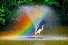 Shower – All About Hairstyles Rainbow Magic, Love Rainbow, Over The Rainbow, Rainbow Colors, Cool Pictures, Cool Photos, Rainbow Aesthetic, Autumn Scenery, Earth From Space