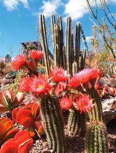 Names+of+Blooming+Cactus | floweringcactus