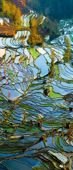 China | Rice Paddy Fields | The man made terraces look like stained glass. Beautiful!