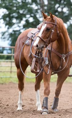 14 Things Every Team Roper Can't Live Without