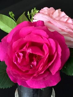 Colorful Roses, Beautiful Roses, Pretty Pictures, Planting Flowers, Lily, Shapes, Plants, Face, Garden