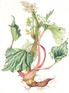 Rhubarb - Hillary Parker