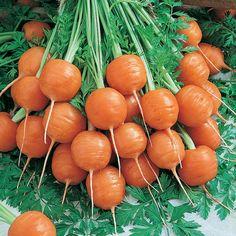 Organic Carrot, Parisienne