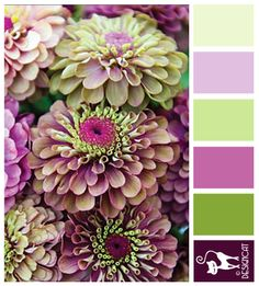 Queen Red Lime Zinnia - Plum, Green, Lilac, pink, Pastel - Designcat Colour Inspiration Board