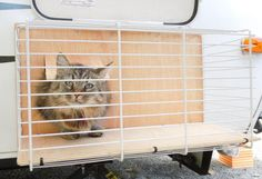 SM I built a portable cat patio that can be hung from the hatch opening. When we're hanging out around the campsite I set up the cat patio. Camper Life, Rv Campers, Camper Trailers, Rv Life, Travel Trailers, Rv Travel, Happy Campers, Junk Journal, Caravan Awnings