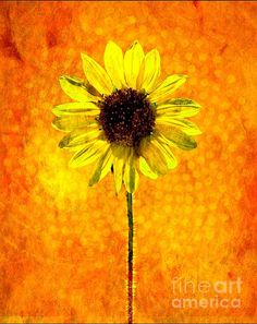 Sunflower Energy Digital Art by Barbara Chichester - Sunflower Energy Fine Art Prints and Posters for Sale fineartamerica.com