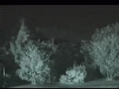 Tall Apparition Filmed in the Woods? On November 14th, 2005, a surveillance camera captured this video of a tall, ghostly figure slowly gliding through the trees and thicket. The uploader claims the camera was set up by amateur ghost hunters. Despite it's appearance, the figure is believed to be about 6 feet [182 cm] tall.